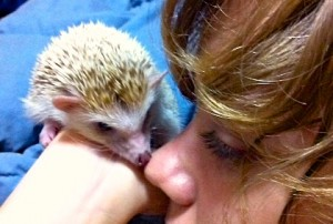 HedgehogNoseKiss 2