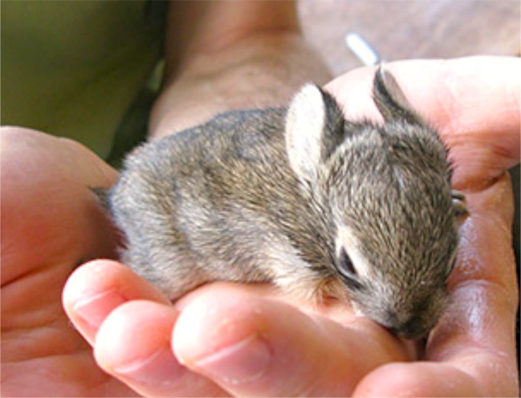 Baby Bunnies Sleeping | Wallpapers Gallery