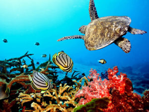Coral Reefs; the Rainforest of the Sea